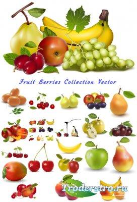 Фруктовая коллекция яблоки, бананы, груша, сливы (Вектор)
