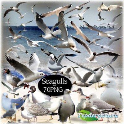 Клипарт  в PNG –  Чайки над морем