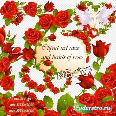 Clipart red roses - Клипарт красные розы и сердечки из роз PNG