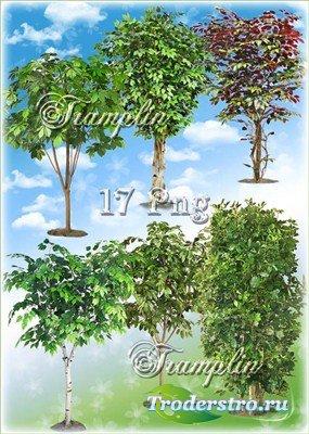 Клипарт на прозрачном фоне – Деревья - Под раскидистой зеленой кроной