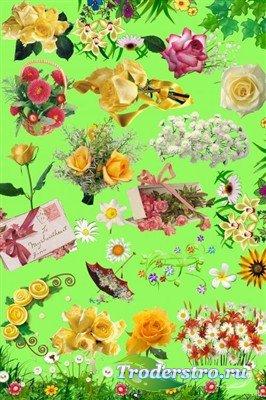 Розы и ромашки в PSD