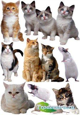 Крысы с мышками и кошками (коллекция PSD)