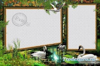 Фоторамочка - Белоснежные лебеди