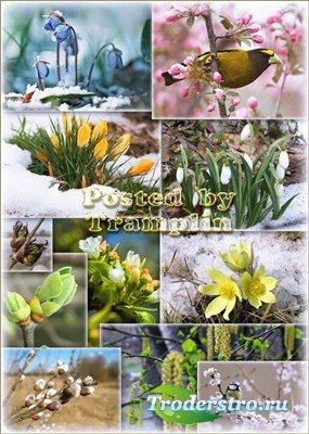 Природа расцветает - Цветение весны