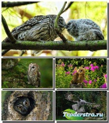 Новый архив обоев с птицами - Совы и филины