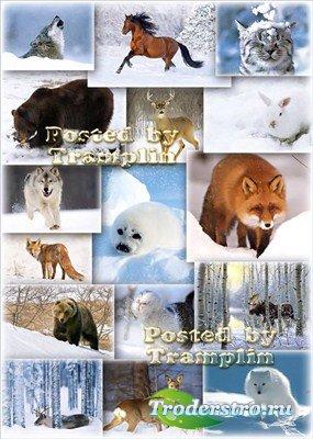 Фото Клипарт – Животные зимой