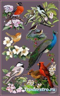 Клипарт - Птицы в цветах