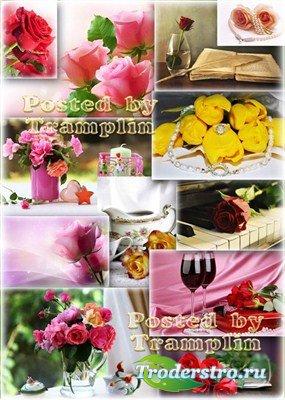 Розы – Цветочные фоны