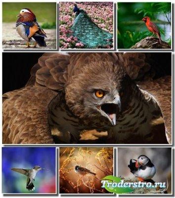 Сборник обоев с птицами для рабочего стола (Часть 1)