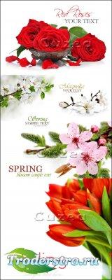 Цветочные весенние композиции с местом для текста - Stock photo