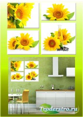 Полиптихи в psd формате - Подсолнухи, картина с подсолнухами, цветы подсолн ...