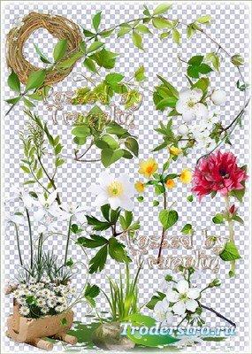 Весенний клипарт на прозрачном фоне – Цветы, листва, зелень, вырезы