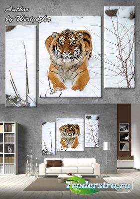 Триптих в psd формате - Тигр, зимний лес, тигр на снегу