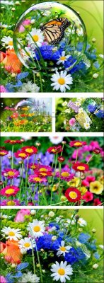 Яркие цветы с бабочкой/ Bright flowers with a butterfly on a lawn - Stock photo
