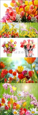 Stock photo - Разноцветные тюльпаны/  spring beautiful tulips