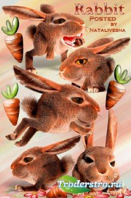 Клипарт в PNG – Кролик креативный