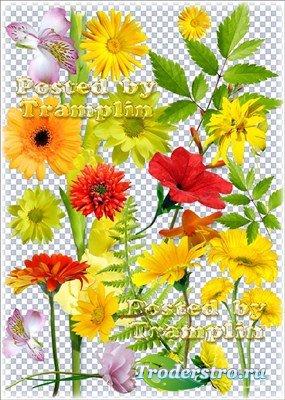 Клипарт на прозрачном фоне – Цветочки и листочки