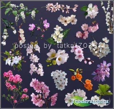 Клипарт для фотошопа - Цветущие веточки дерева