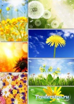 Растровые цветочные фоны - В ожидании весны