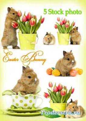 Пасхальные кролики и тюльпаны - Растровый клипарт