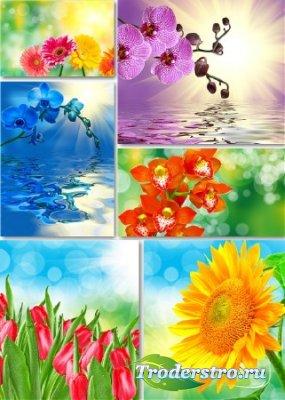 Растровый клипарт - Весенние цветы