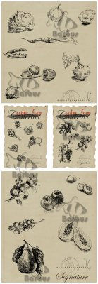 Fruits and vegetable hand drawing vector / Фрукты и овощи нарисованные от р ...