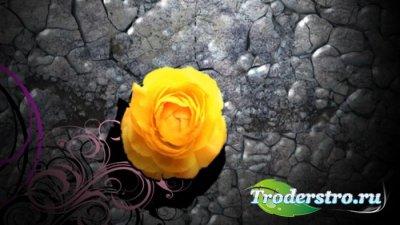 Футаж - Каменный цветок