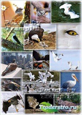Фото клипарт – Птицы, мир дикой природы