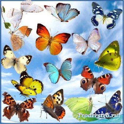 Клипарт - Красивые бабочки на прозрачном фоне