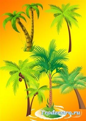 Коллекция высококачественного клипарта - Векторные пальмы