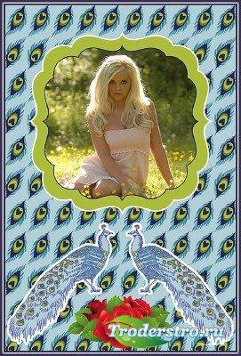 Фотошоп рамка перья павлина