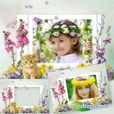 Летние рамки для фотографий - Аромат полевых цветов