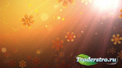 Фоновый футаж с цветами и световыми эффектами