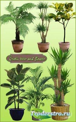 Клипарт PNG - Комнатные деревья и цветы 3