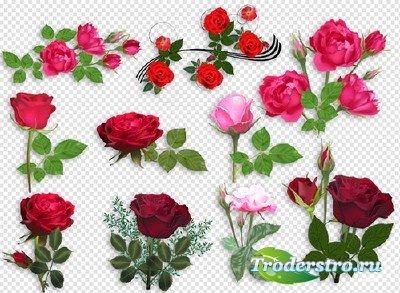 Клипарт - Красные розы для фотошоп на прозрачном фоне