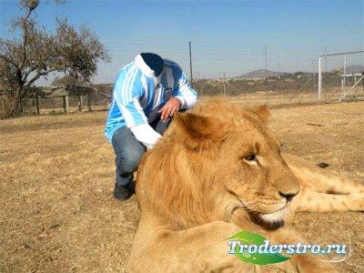Шаблон psd мужской - Фотография с царем зверей