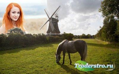 Рамка для фото - На красивой поляне пасется лошадка у мельницы