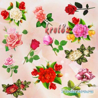 Клипарт красные, белые и желтые розы на прозрачном фоне