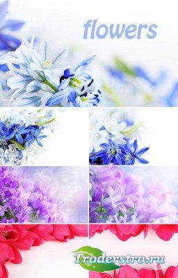 Весенние цветы (набор фонов)