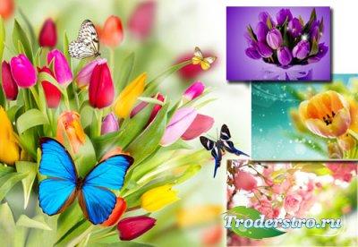 Фоны для фотографий - Цветы весной