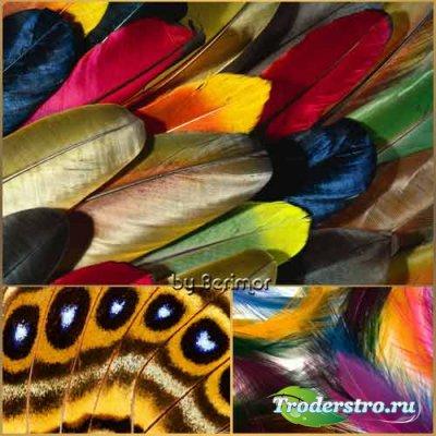 Бесконечно изящные перья разнообразных птиц