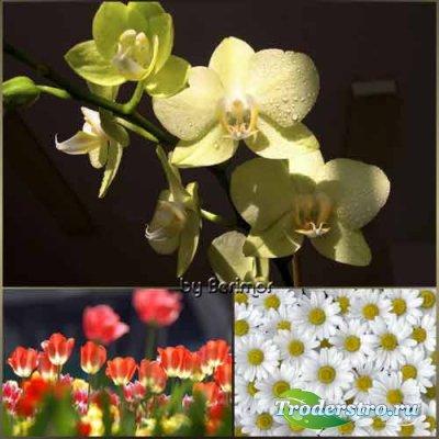 Прекрасные цветы и разные растения
