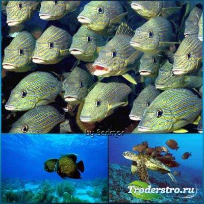 Замечательное и разнообразное подводное царство