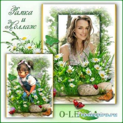 Рамка для фотошопа - Полевой цветочек, милые ромашки