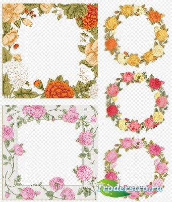 Клипарт- Рамки вырезы из красивых цветов роз на прозрачном фоне