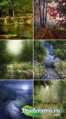 Сказочные лесные чащи и тропинки