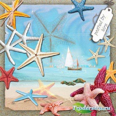 Клипарт на прозрачном фоне  - Морские звезды во всей красе