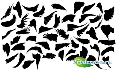 Silhouettes of bird's wings vector