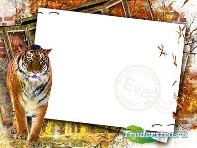 Рамка для фотошоп - Сохраним тигра