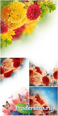 Осенние цветочные фоны - растровый клипарт